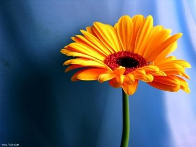 عکس هایی از گلهای بسیار زیبا Www.Pix98.CoM